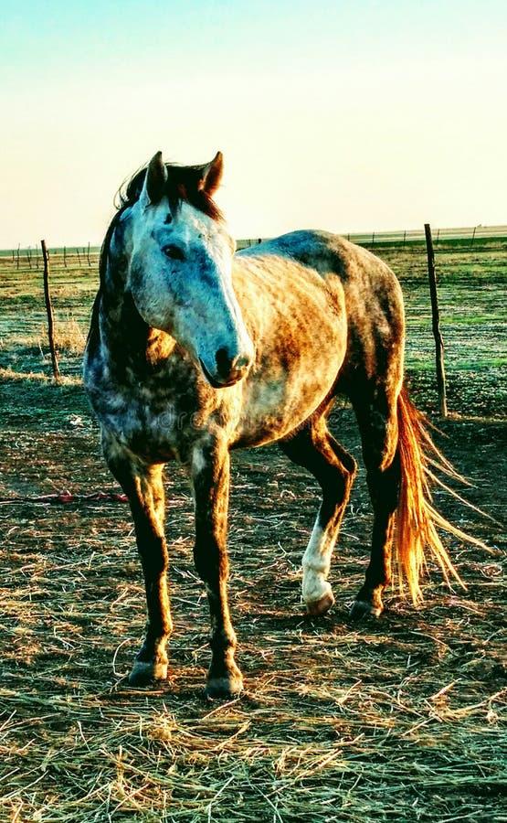 Boerderijpaarden stock foto