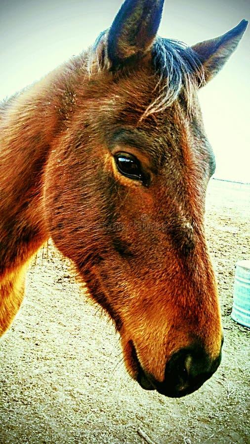 Boerderijpaarden royalty-vrije stock foto