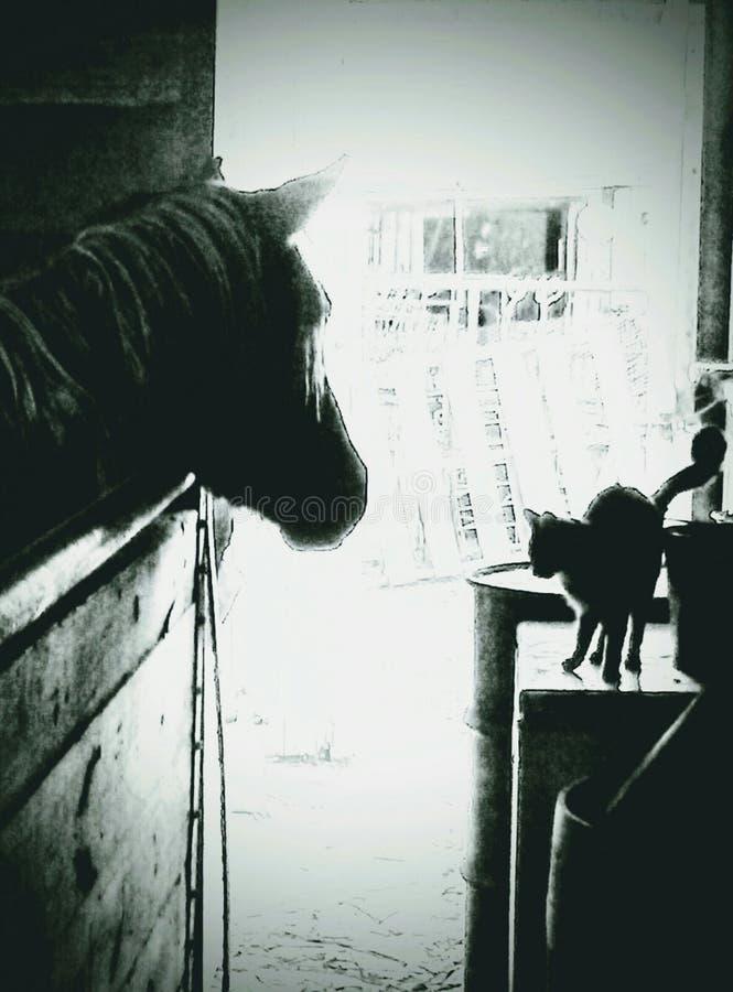 Boerderijpaarden royalty-vrije stock foto's