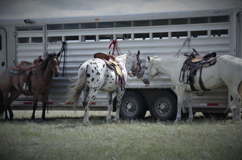 Boerderijpaarden die op ruiters wachten stock foto's