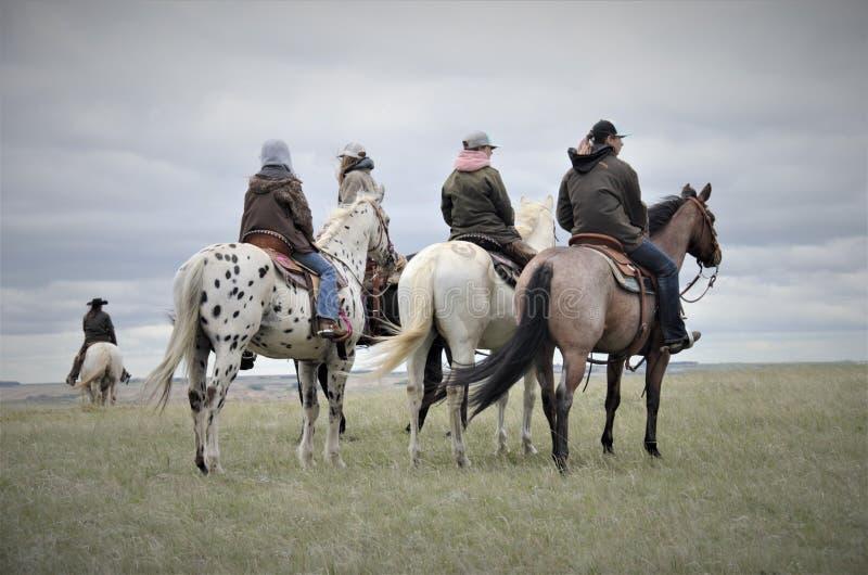 Boerderijpaarden met ruiters in weiland royalty-vrije stock foto