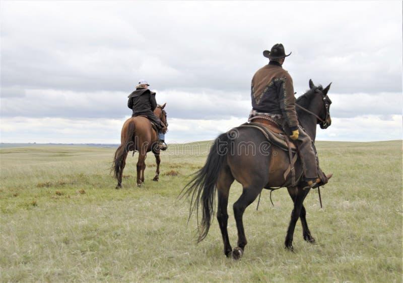 Boerderijpaarden met ruiters in weiland stock foto's