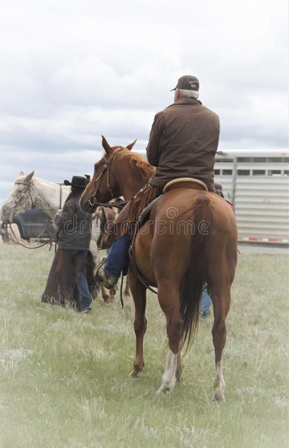 Boerderijpaarden met ruiters in weiland royalty-vrije stock afbeeldingen