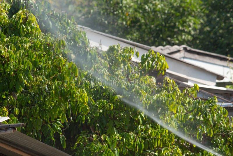 Boeren besproeien pesticiden in Longan-bomen in de tuin royalty-vrije stock afbeelding