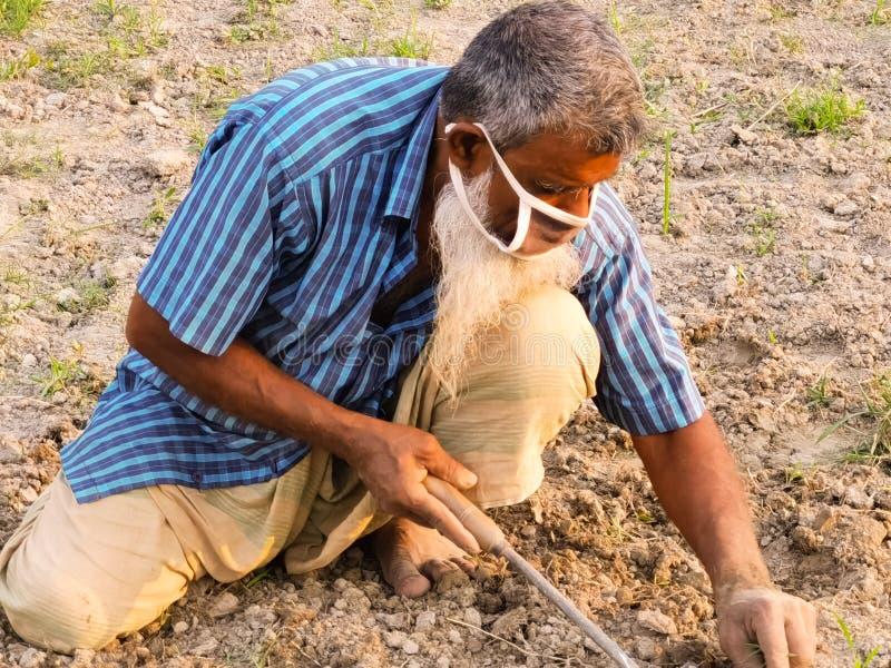 Boeren werken in het veld, 16 april 2020, mathavanga, comilla, Bangladesh Gebruik een masker om zichzelf te beschermen tegen het  stock foto