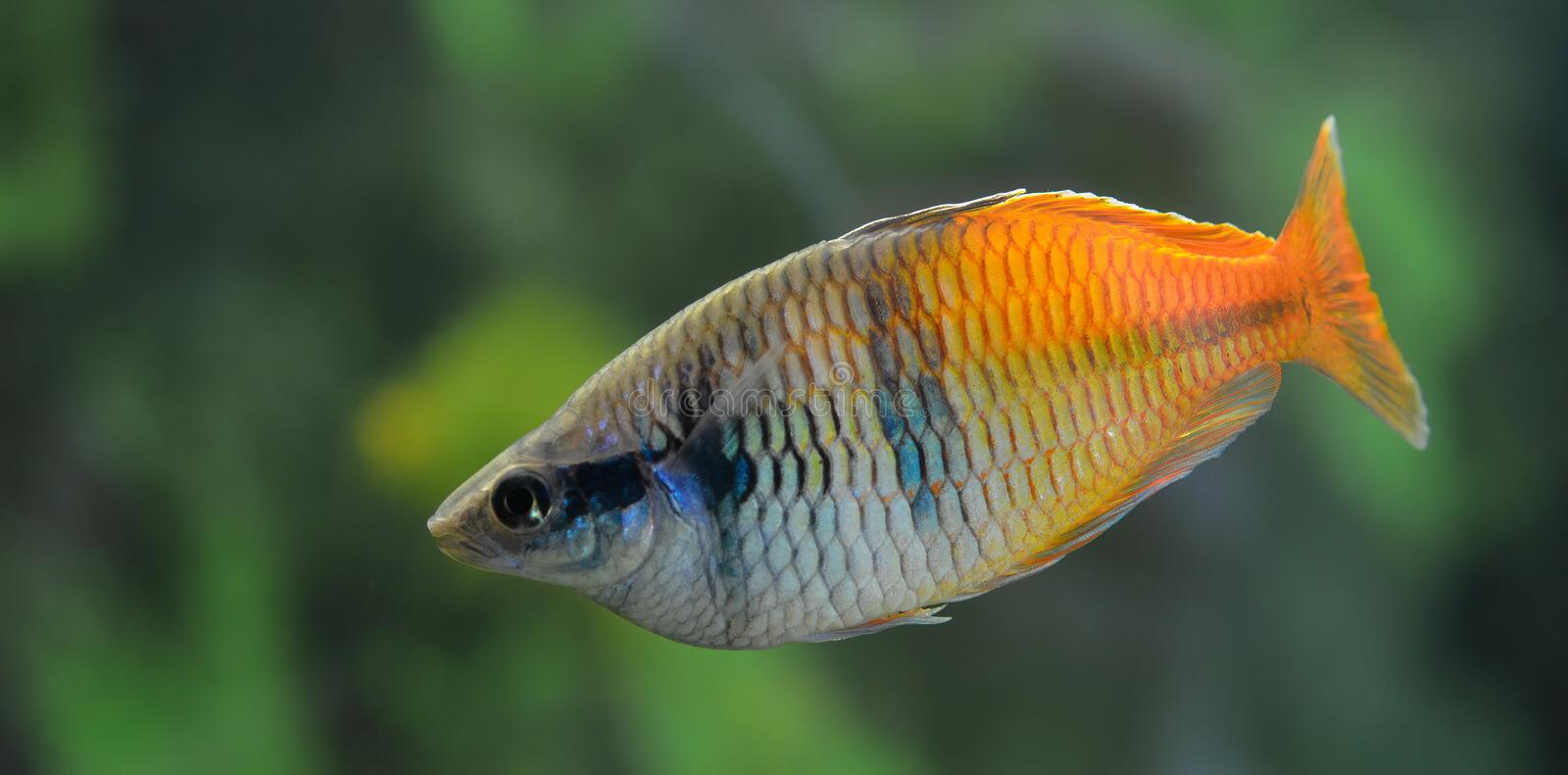 boesemani rainbowfish boesemani rainbow fish boesemani boesemani rainbow size boesemani rainbow fish for sale boesemani rainbowfish size boesemani rainbow fish care boesemani fish boesemani rainbow tank mates boesemani rainbow fish male female boeseman female boesemani rainbow fish boesemani rainbow for sale boesemani rainbow female boesemani rainbowfish tank mates boesemani rainbow care bosami rainbow boesemani rainbow tank size boesemani tropical rainbowfish breeding boesemani rainbow fish boeseman's rainbowfish size boesemani rainbow fish breeding freshwater boesemani rainbow boeseman's rainbowfish freshwater fish best food for boesemani rainbow fish gary lange boesemani rainbowfish boeseman's rainbow boeseman's rainbowfish care gary lange boesemani rainbowfish for sale