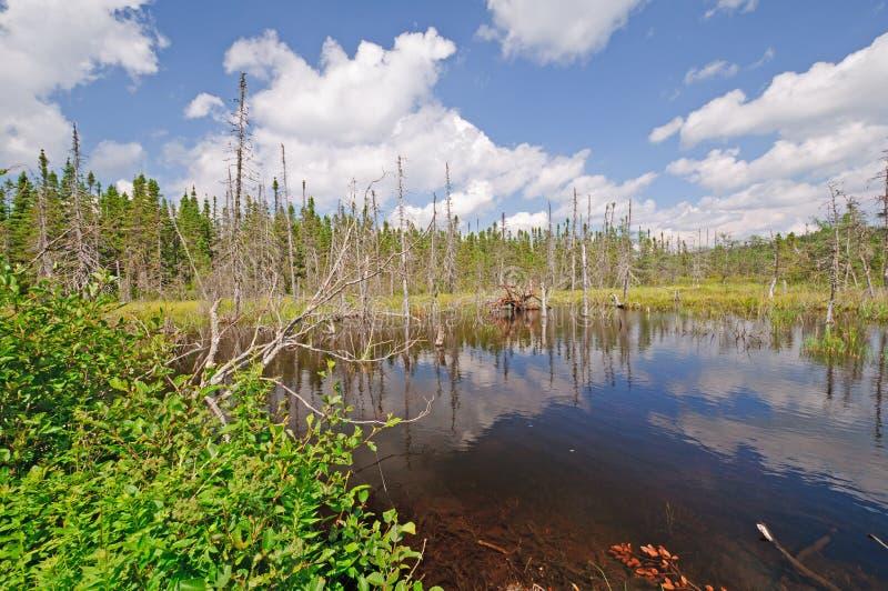 Bog湖在原野 免版税库存图片