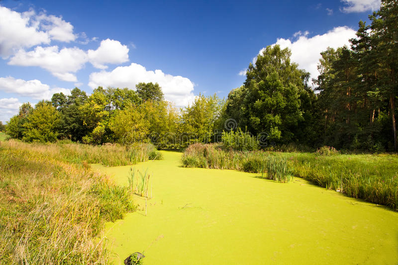 Bog covered with ooze stock image