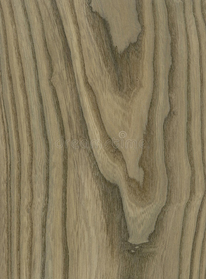 Free Bog Elm Wood Veneer Texture Royalty Free Stock Photos - 18613888