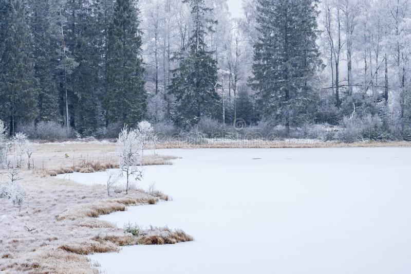 Bog lake in a boreal forest with frost and ice stock photography