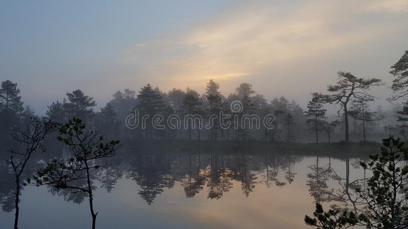 Bog lake early in the morning royalty free stock images