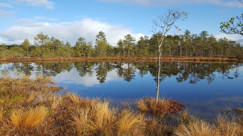 Bog lake royalty free stock image