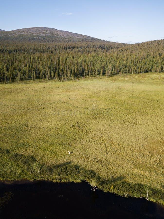 Bog Lakeside com renas fotografia de stock