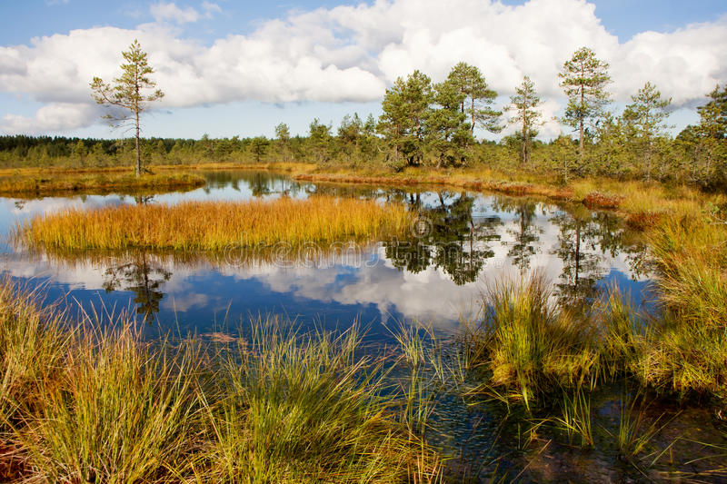 Bog landscape royalty free stock photography
