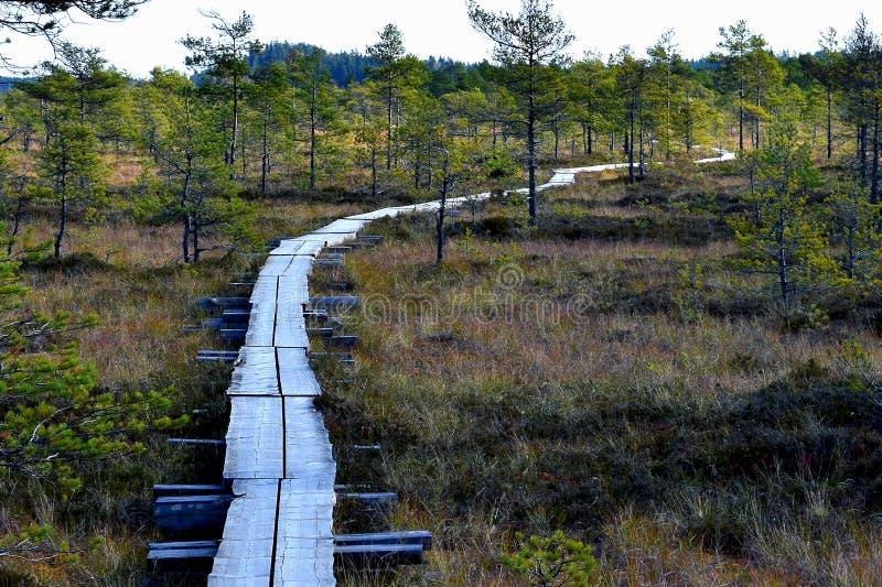 Bog landscape stock photo
