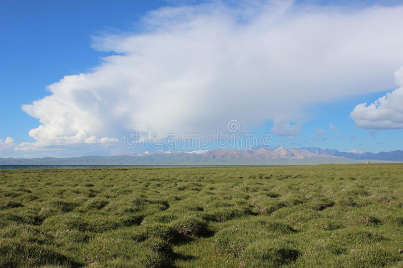 Bog landscape royalty free stock photo
