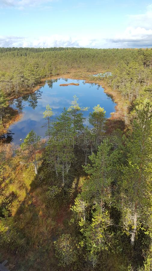 Bog Landscape royalty free stock photos