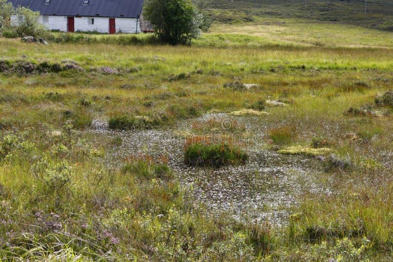 Bog Pool em Blackrock Cottage foto de stock