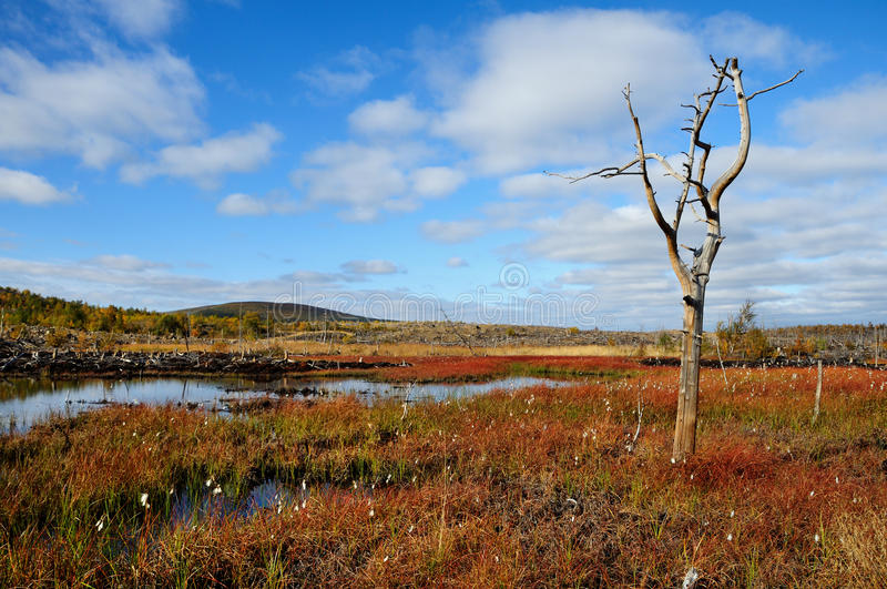 Bog Small Stock Images