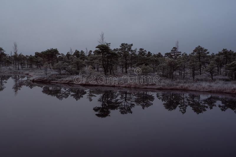 Download Bog With Small Pine Trees Covered In Early Winter Morning Frost Stock Image - Image: 103158433