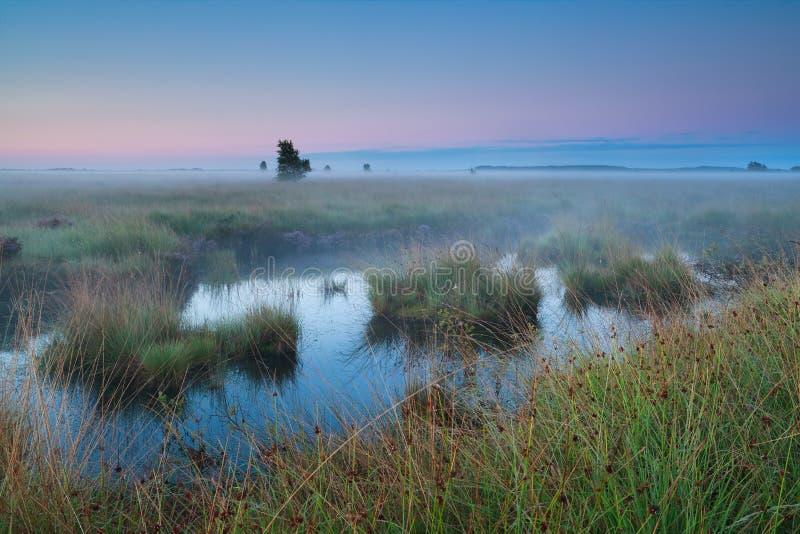 Bog during summer sunrise stock images