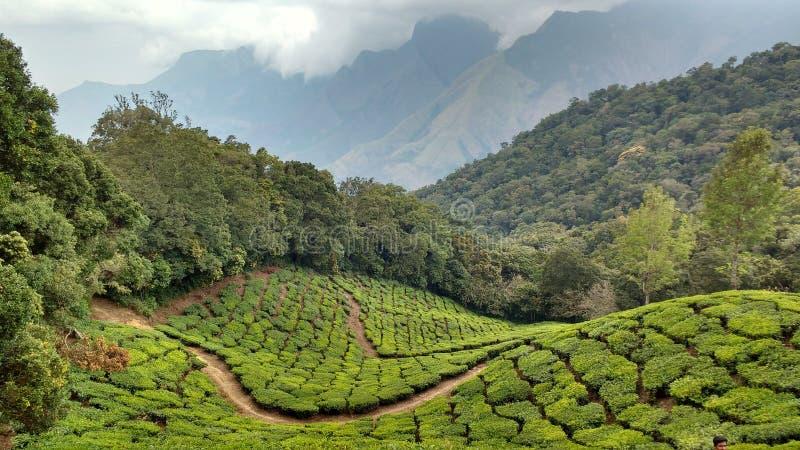 Bogactwo zielona natura munar fotografia stock