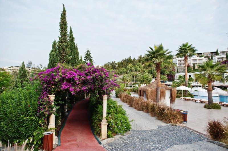 Bogen von purpurroten Blumen des Bouganvillas in die Türkei-Erholungsort stockfoto