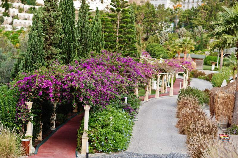 Bogen von purpurroten Blumen des Bouganvillas in die Türkei-Erholungsort lizenzfreie stockfotos
