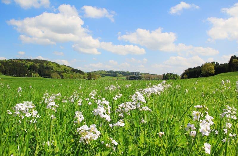 Bogland pittoresco con i wildflowers, paesaggio tedesco fotografia stock