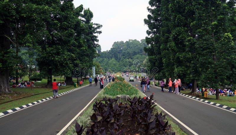 Bogor botaniska trädgårdar royaltyfri fotografi