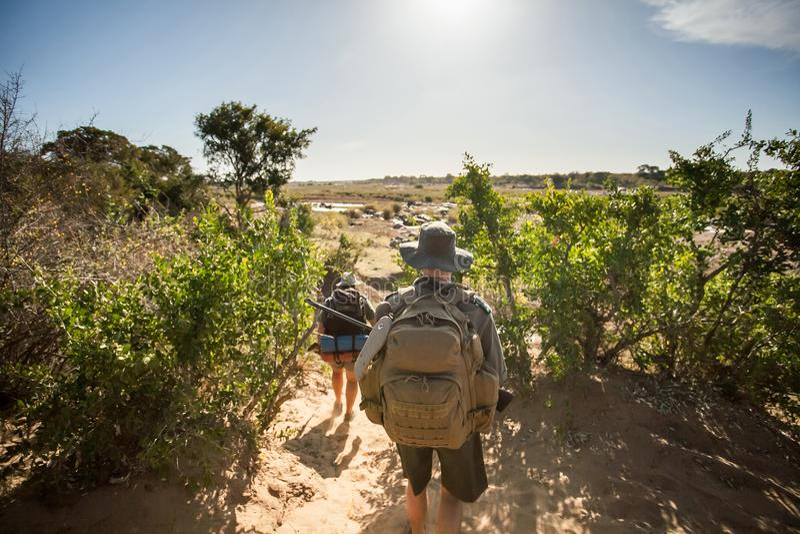 Bogserare som söker efter tjuvskyttar i busken royaltyfri foto