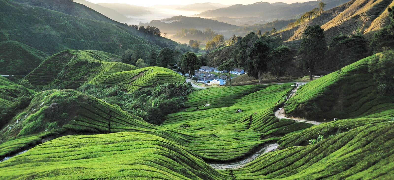 BOH Plantations, Cameron Highlands, Pahang, Malaysia. BOH Plantations Sdn. Bhd. is the largest black tea manufacturer in Malaysia, with both domestic and royalty free stock image