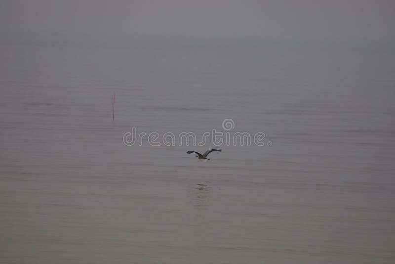 Heron during the high tide in the Bohai sea stock photo