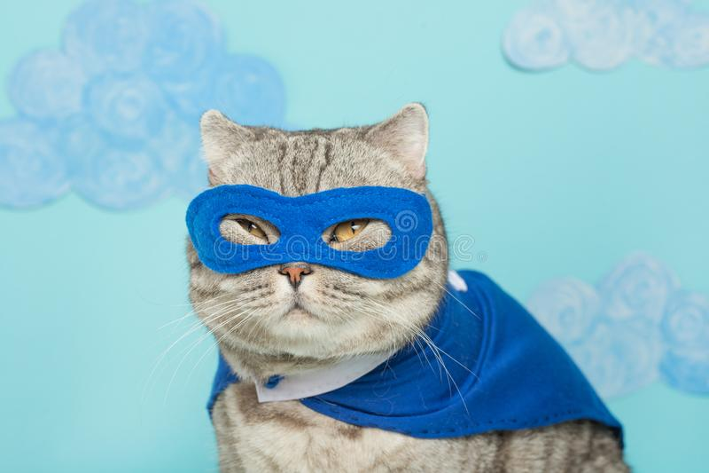 bohatera kot, Szkocki Whiskas z błękitną maską i peleryną Pojęcie bohater, super kot, lider fotografia royalty free