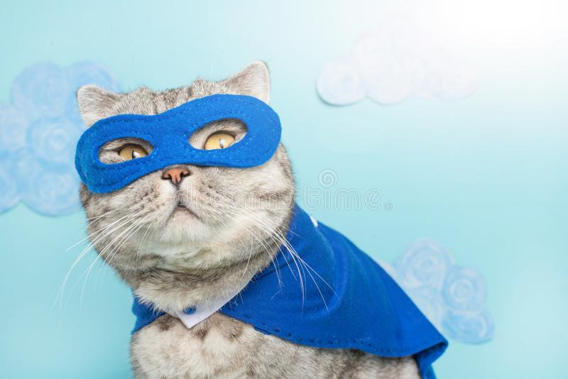 bohatera kot, Szkocki Whiskas z błękitną maską i peleryną Pojęcie bohater, super kot, lider obraz royalty free