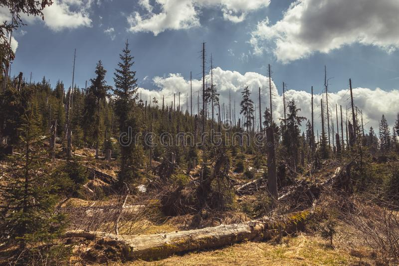 Landscape with dead and living trees Bohemian Forest royalty free stock photography