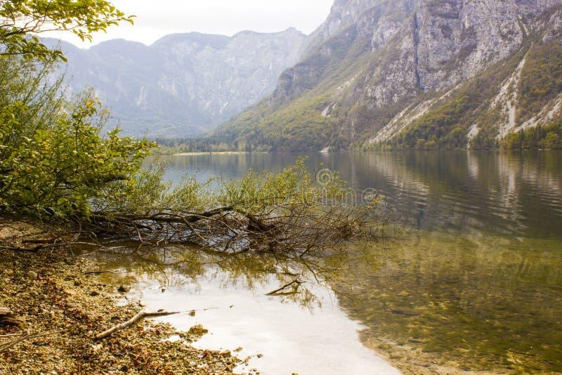 bohinj湖斯洛文尼亚 免版税库存图片
