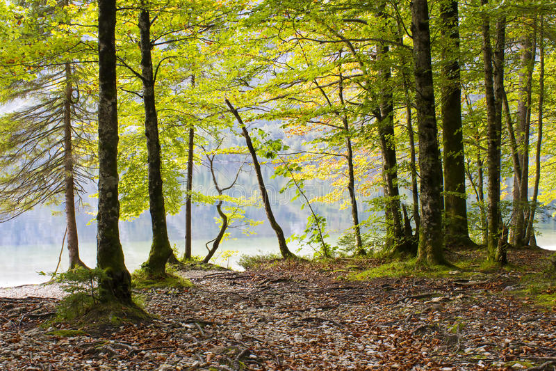 Bohinj湖,斯洛文尼亚 免版税图库摄影