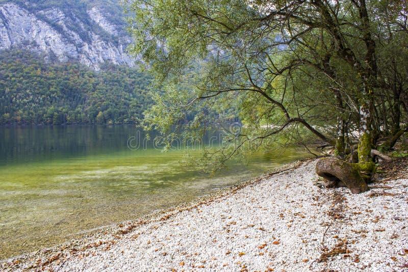 Bohinj湖,斯洛文尼亚 图库摄影
