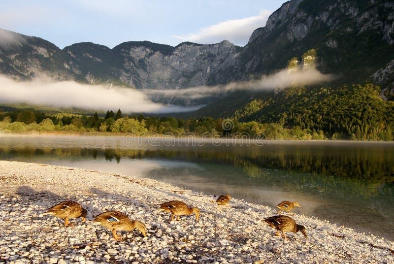 Bohinj See in Slowenien lizenzfreies stockbild