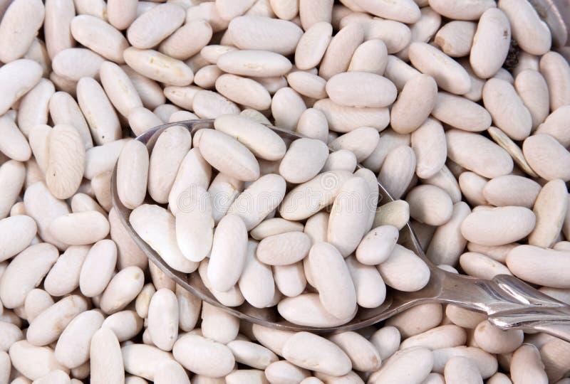 Bohne, weiße Nierenhülsenfrucht stockbild