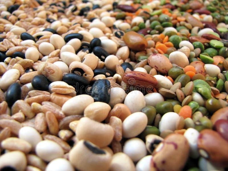 Bohnen und Getreide stockfoto