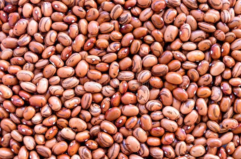 Bohnen von Bohnenbohnen Hintergrund vieler K?rner der getrockneten Bohnen Brown-Bohnen-Beschaffenheit sehr viele Fleischmehlkl??e stockfotos