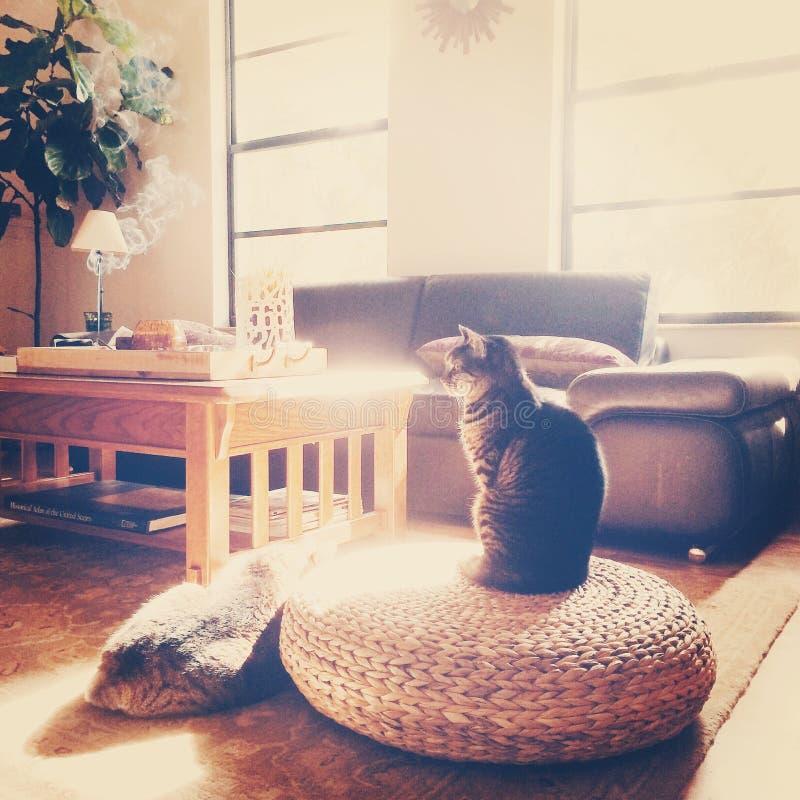 boho wohnzimmer mit katzen im sonnenschein stockbild bild von duft schlamm 49906135. Black Bedroom Furniture Sets. Home Design Ideas