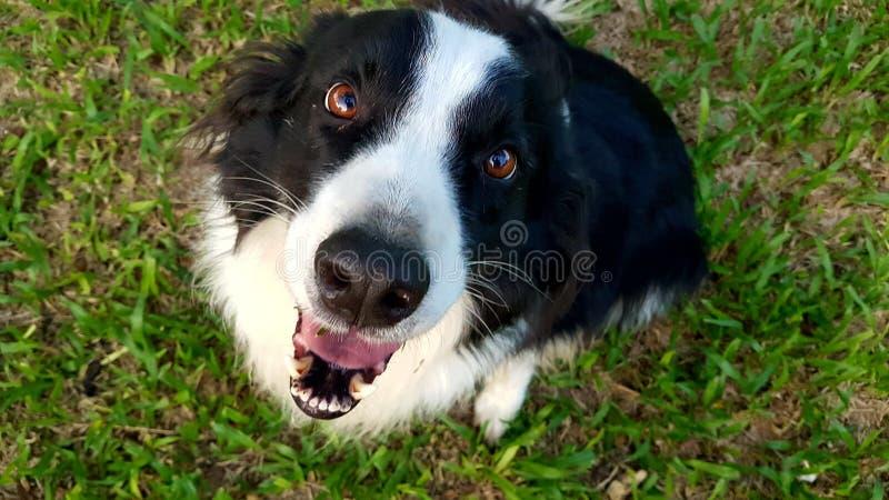 Bohr den lyckliga hunden royaltyfria foton