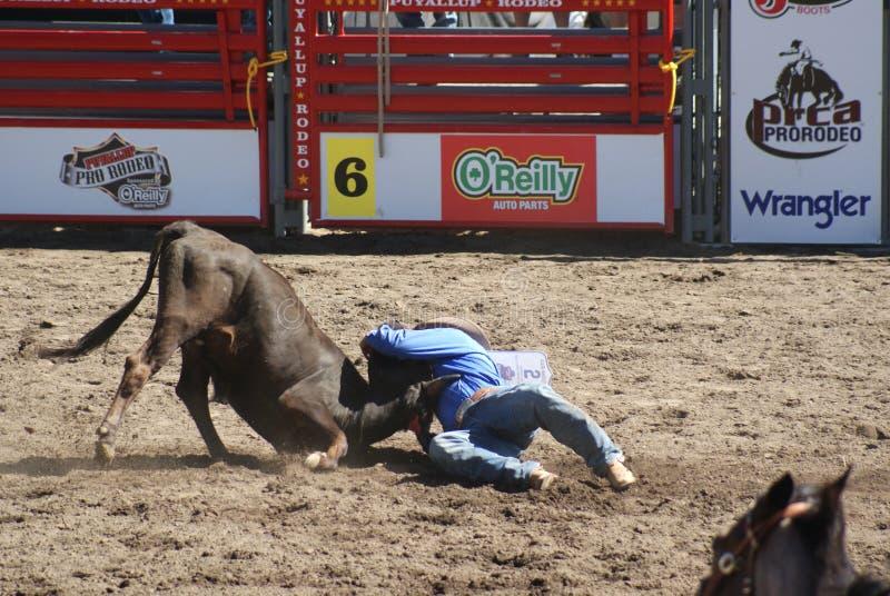 Download Boi Do Cowboy Que Wrestling Imagem Editorial - Imagem de chapéu, lama: 26516670