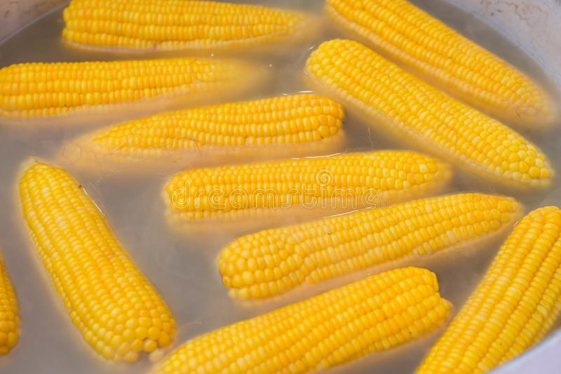 Boil the corn in the boiling water.  royalty free stock photo