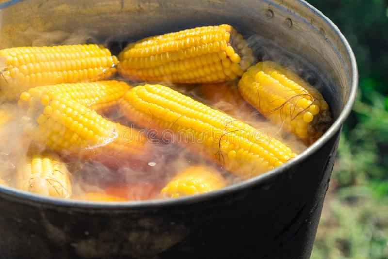Boil corn in boiling water on a fire.  royalty free stock images