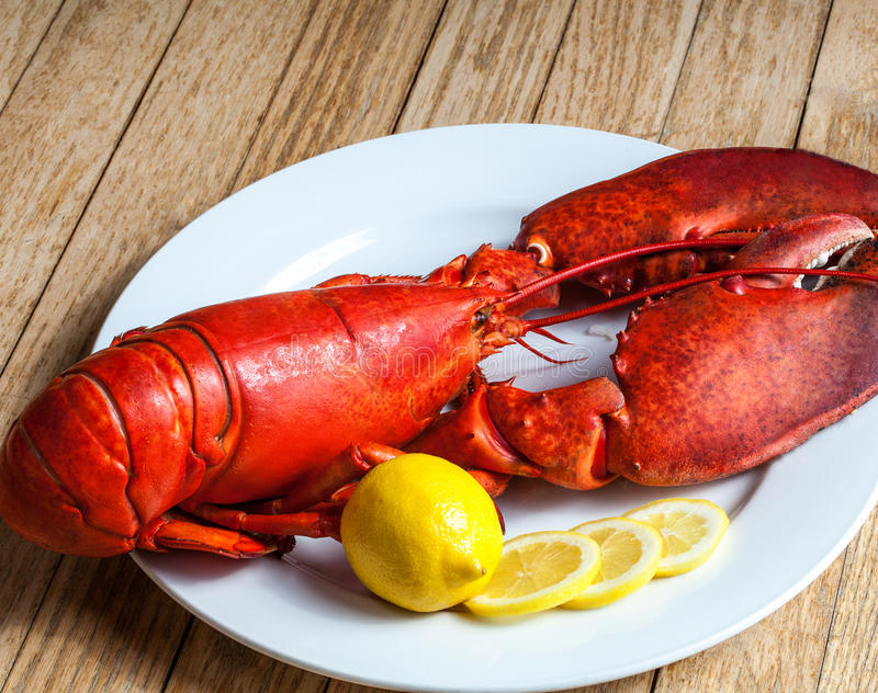 Boiled Atlantic Lobster. A delicious freshly steamed lobster in the rough stock image
