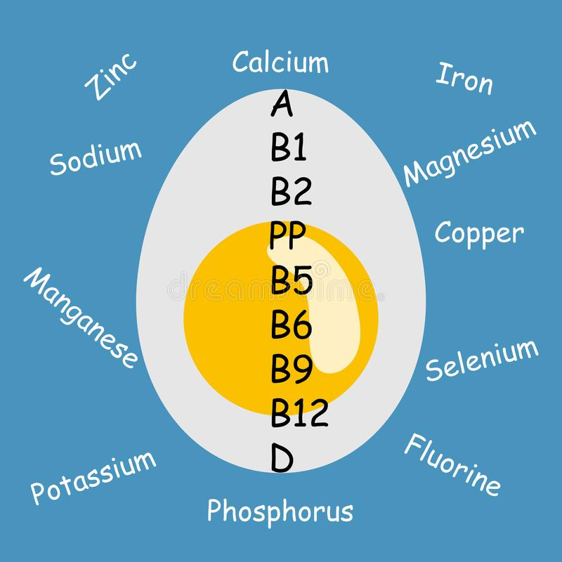 Vector illustration -Vitamins in boiled egg А,В1,В2,PP,В5,В6,В9,В12,D,Е,К. Trace elements - Potassium, Calcium, Iron, Sod. Boiled,calcium,concept,copper,design,egg,flat,fluorine,icon,illustration,iron,isolated,magnesium,manganese,phosphorus,potassium,selenium,sign,sodium,symbol,trace elements,vector,vitamins,zinc vector illustration